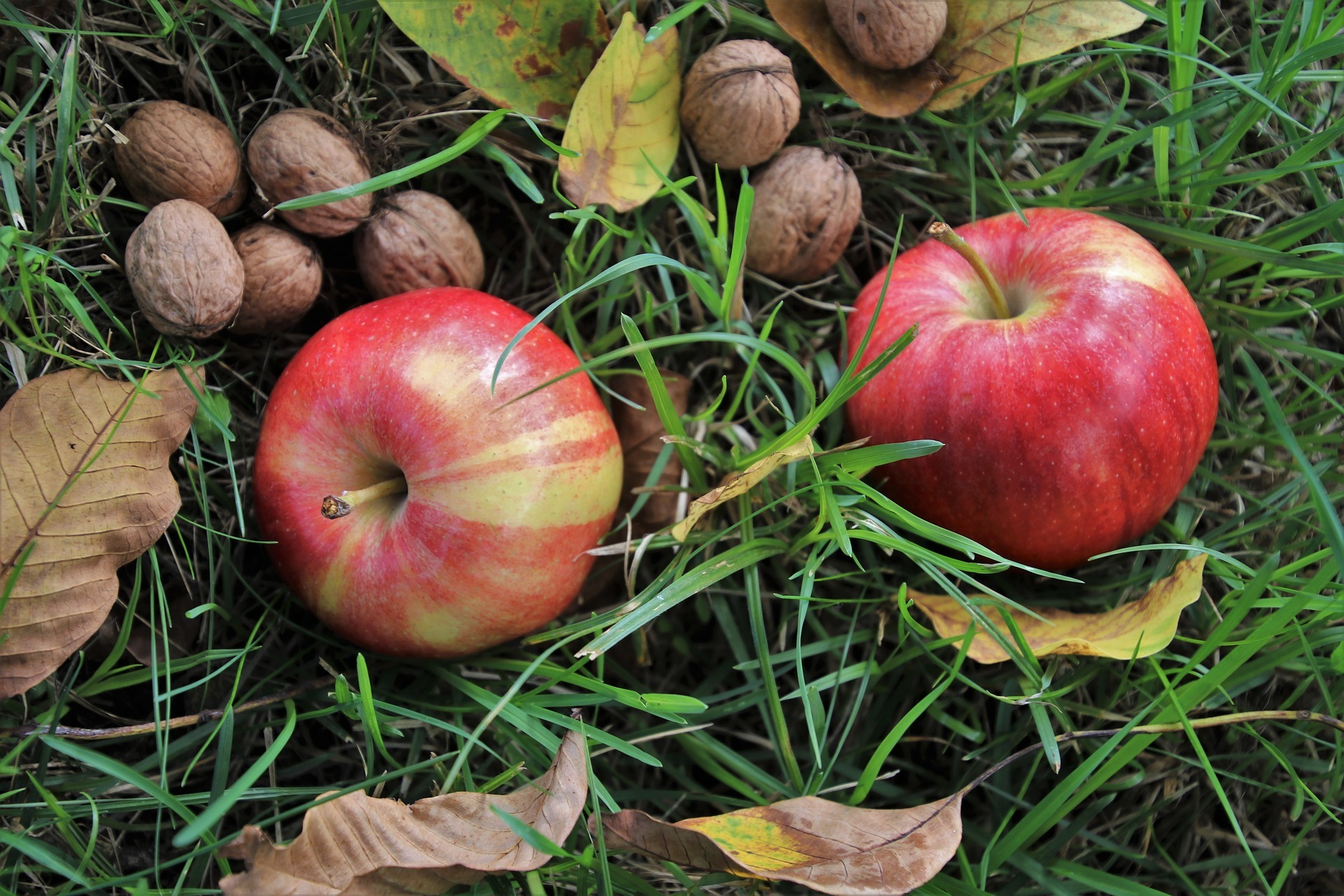 In de moestuin: appelsap persen, hoe gaat dat in zijn werk?