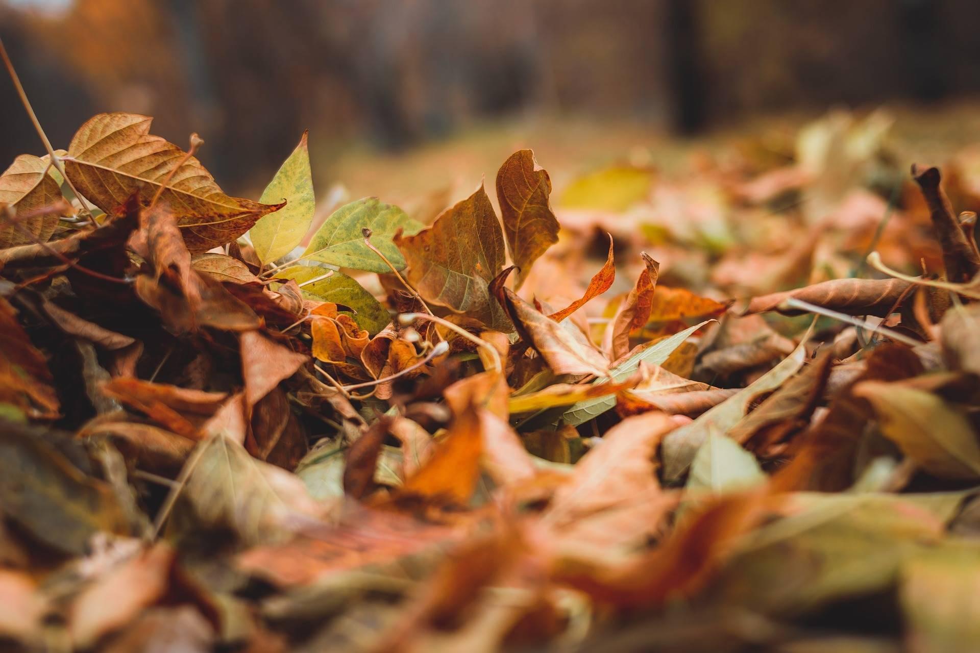 Zeven prachtige herfstwandelingen